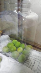 果実酒ボトルに入れられた梅の実
