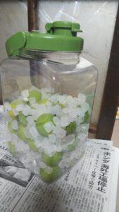梅と氷砂糖が詰められた果実酒ボトル
